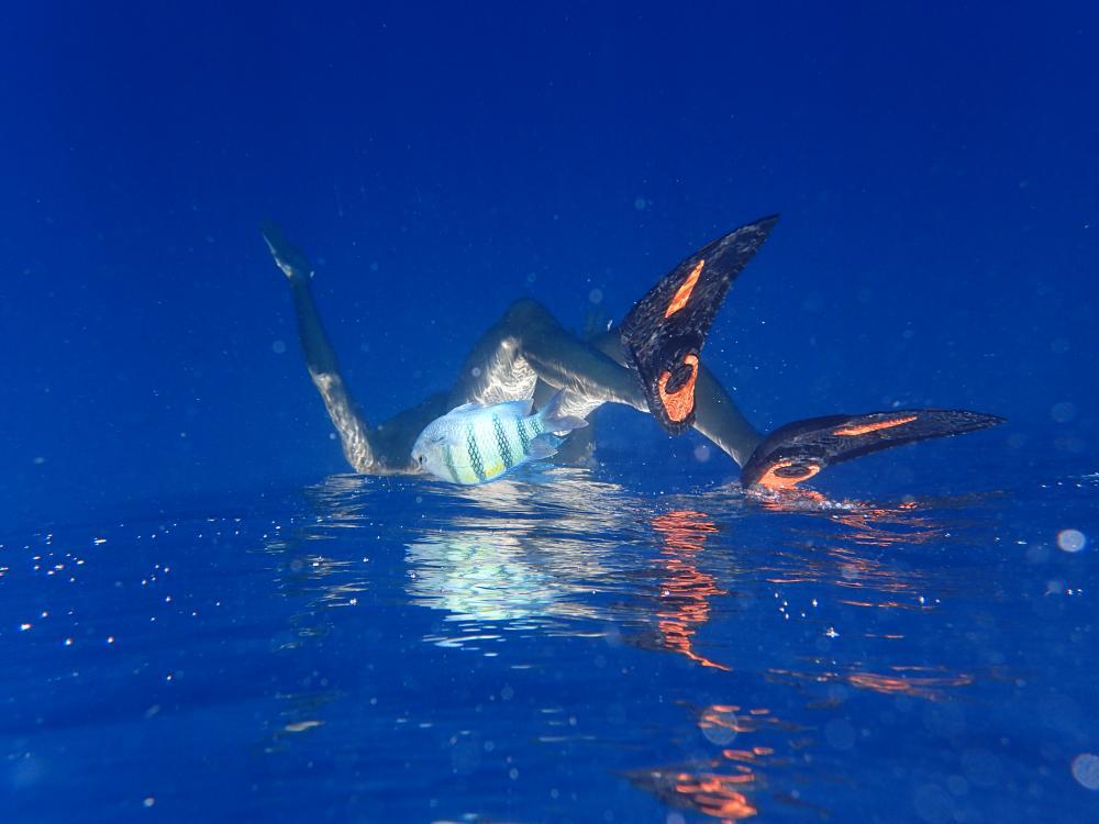 Wasserwelten, Kategorie Neue Medien