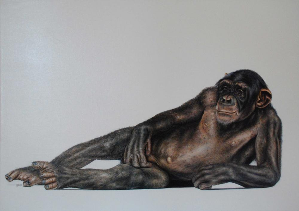 Chimpanse relaxed